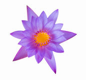 Beautiful lotus isolate Royalty Free Stock Photos