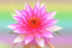 Beautiful lotus pattern for background blurred color gradation. Stock Photography