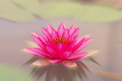 Beautiful lotus pattern for background blurred color gradation. Royalty Free Stock Photos