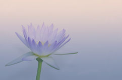 Beautiful lotus pattern for background blurred color gradation. Royalty Free Stock Images