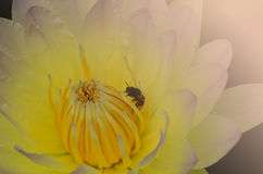 Beautiful lotus pattern for background blurred color gradation. Stock Photo