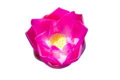 Beautiful lotus Stock Images