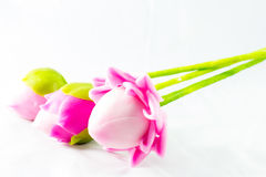 Beautiful lotus. Three beautiful lotus on white background Stock Photo