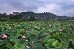 Beautiful lotus village Royalty Free Stock Photo
