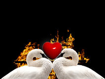 Beautiful Love Birds Stock Images