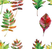 Beautiful lovely cute wonderful graphic bright floral herbal autumn red orange green yellow maple rowan leaves frame watercolor Stock Image