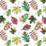 Beautiful lovely cute wonderful graphic bright floral herbal autumn red orange green yellow maple rowan leaves pattern watercolor Stock Photos