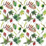 Beautiful lovely cute wonderful graphic bright floral herbal autumn red orange green yellow maple rowan leaves pattern watercolor Royalty Free Stock Photography