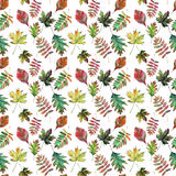 Beautiful lovely cute wonderful graphic bright floral herbal autumn red orange green yellow maple rowan leaves pattern watercolor Royalty Free Stock Images