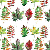Beautiful lovely cute wonderful graphic bright floral herbal autumn red orange green yellow maple rowan leaves pattern watercolor Stock Images