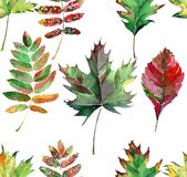 Beautiful lovely cute wonderful graphic bright floral herbal autumn red orange green yellow maple rowan leaves pattern watercolor Stock Image