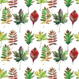 Beautiful lovely cute wonderful graphic bright floral herbal autumn red orange green yellow maple rowan leaves pattern watercolor Royalty Free Stock Photo