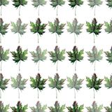 Beautiful lovely graphic artistic abstract bright floral herbal autumn green maple leaves horizontal pattern watercolor hand sketc. H. Perfect for textile Royalty Free Stock Photos