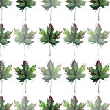Beautiful lovely graphic artistic abstract bright floral herbal autumn green maple leaves pattern watercolor hand sketch Stock Photo