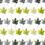 Beautiful lovely graphic artistic abstract bright floral herbal autumn green maple leaves pattern watercolor hand sketch Royalty Free Stock Image