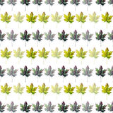 Beautiful lovely graphic artistic abstract bright floral herbal autumn green maple leaves pattern watercolor hand sketch Royalty Free Stock Images