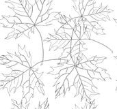 Beautiful lovely graphic artistic abstract floral autumn maple leaves pattern vector hand sketch Stock Photos