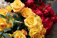 Bunch of yellow and red roses royalty free stock photos