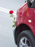 Beautiful lrose and car. Beautiful live rose is inserted to a forward bumper of the car Stock Images