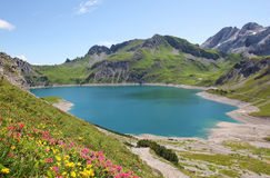 Beautiful lunersee and alpine flowers Royalty Free Stock Image