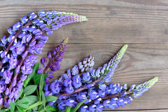 Beautiful lupine flowers on wooden background Royalty Free Stock Images
