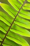 Beautiful lush fern frond Stock Images