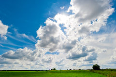 Beautiful lush field and cumulus clouds Royalty Free Stock Photography