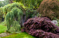 Beautiful lush foliage of Japanese Maple and Weeping Willow Stock Photo
