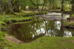 Beautiful lush forest scene with stream Royalty Free Stock Photography
