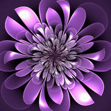 Beautiful lush fractal flower. Artwork for creative design Royalty Free Stock Images