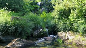 Small waterfall stream. Beautiful lush green forest, small mountain waterfall stream stock video footage