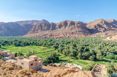 Beautiful lush green oasis with buildings and mountains at Todra Gorge, Morocco, North Africa Stock Photography