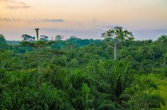 Beautiful lush green West African rain forest during amazing sunset, Liberia, West Africa.  royalty free stock images