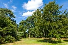Beautiful Lush Green Woodland Park Garden Stock Photography
