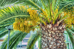 Beautiful lush palm Royalty Free Stock Photos