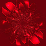 Beautiful lush red flower on red background. Stock Photography