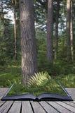 Beautiful lush vibrant forest landscape in Summer conceptual boo Stock Photo