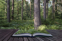 Beautiful lush vibrant forest landscape in Summer conceptual boo Royalty Free Stock Photo