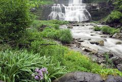 Beautiful Lush Waterfall Stock Images