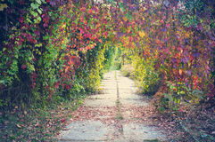 Beautiful lyrical autumn view in the park in vintage colors Royalty Free Stock Image