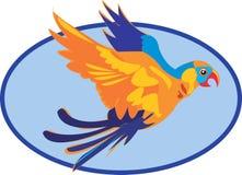Beautiful Macaw Stock Photography