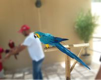 Beautiful Macaw stock photo