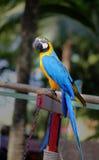 Beautiful macaw parrot Stock Photo