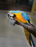Beautiful macaw parrot Royalty Free Stock Photos
