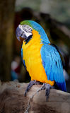 Beautiful macaw parrot Stock Photos