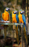 Beautiful macaw parrots Stock Photo