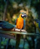 Beautiful macaw parrots Stock Photos
