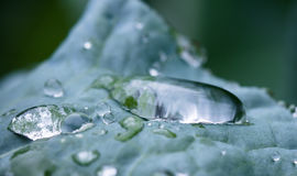 Beautiful macro close up of pure rain drops on blue green leaf with venation texture. Zen background Stock Images