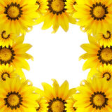 Beautiful macro flower, sunflower background Royalty Free Stock Images