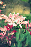 Beautiful macro flowers in retro style Royalty Free Stock Photography